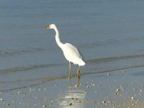 egret-4