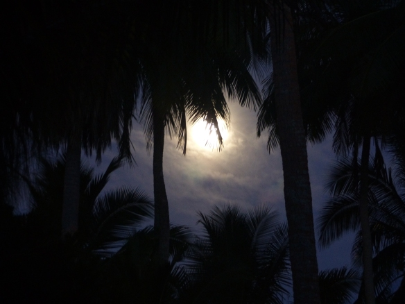 full-moon-in-the-palms