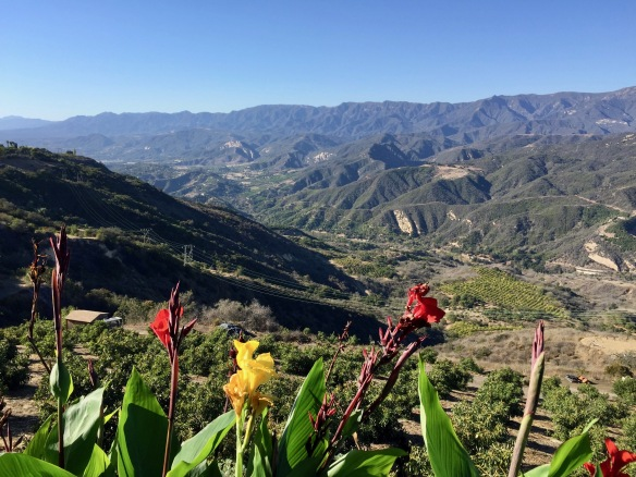 rincon-mountain-view