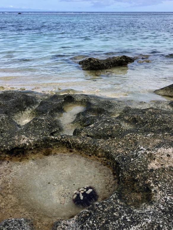 sea-urchin-day-1