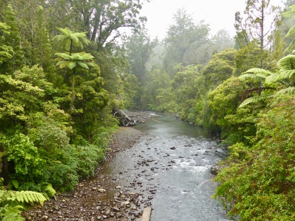 waipoua-forest