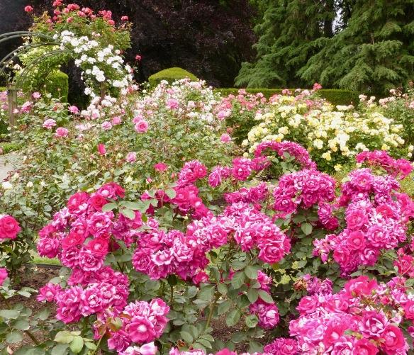 chc-gardens-9